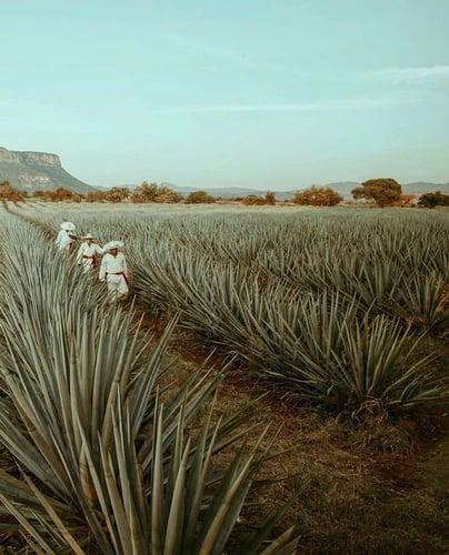 2_ódigo_1530_Reposado_Tequila_Los_Bajos